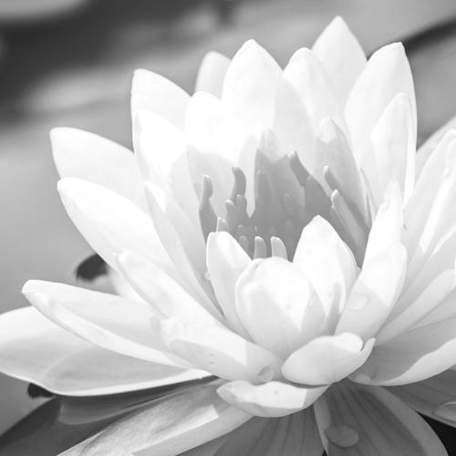 19. September 2021 – Samyama: integrale Yoga-Meditation